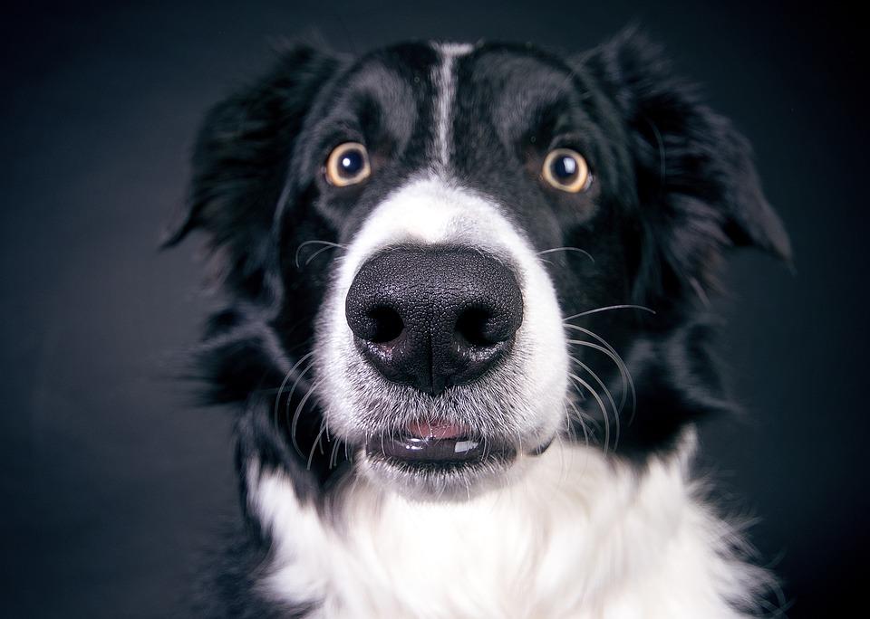 Curiosidades sobre el olfato de los perros