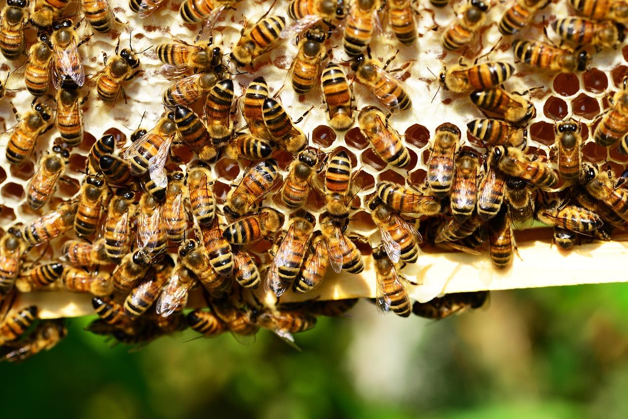 La desaparición de las abejas