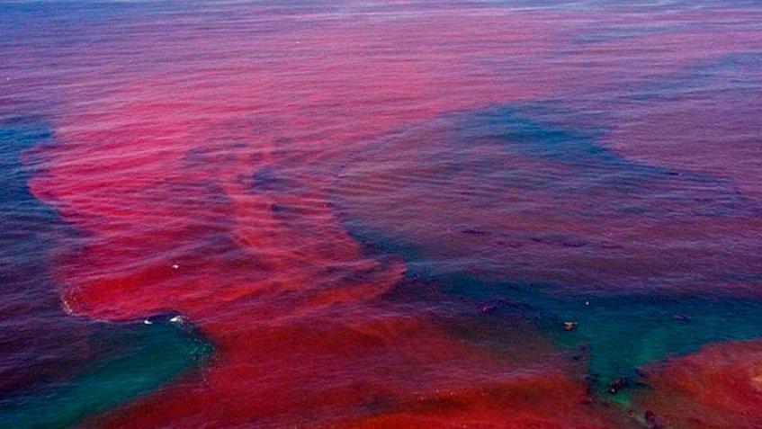 ¿Qué son las mareas rojas?