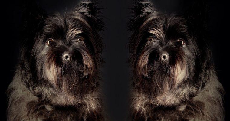 El nuevo negocio de clonación de mascotas