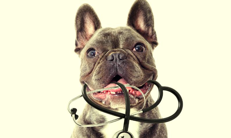 Perros capaces de detectar COVID-19